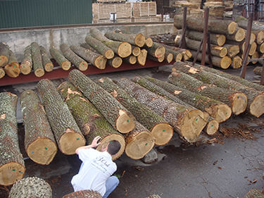 Russian Oak Forestry