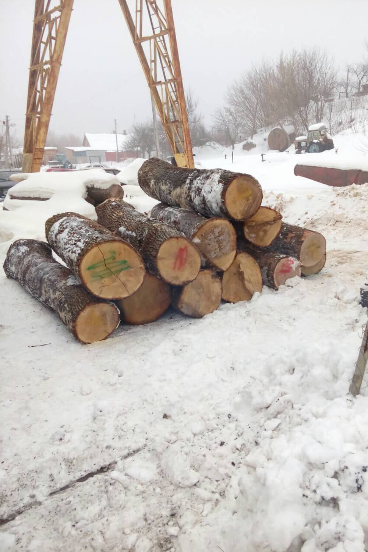 Oak Logs (2)