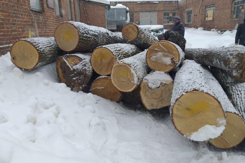 Oak Logs (3)