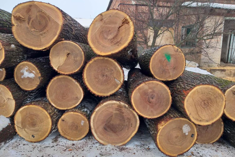 Oak Logs (4)